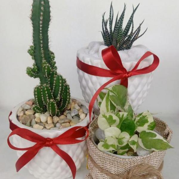 FD 209 Decorated Gift Plant