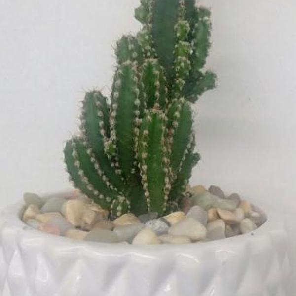 FD 01 Decorated Cactus