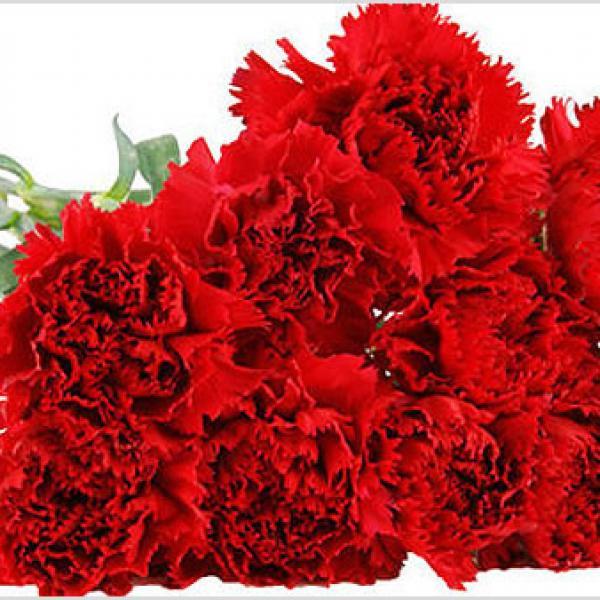 FD 126 Carnation