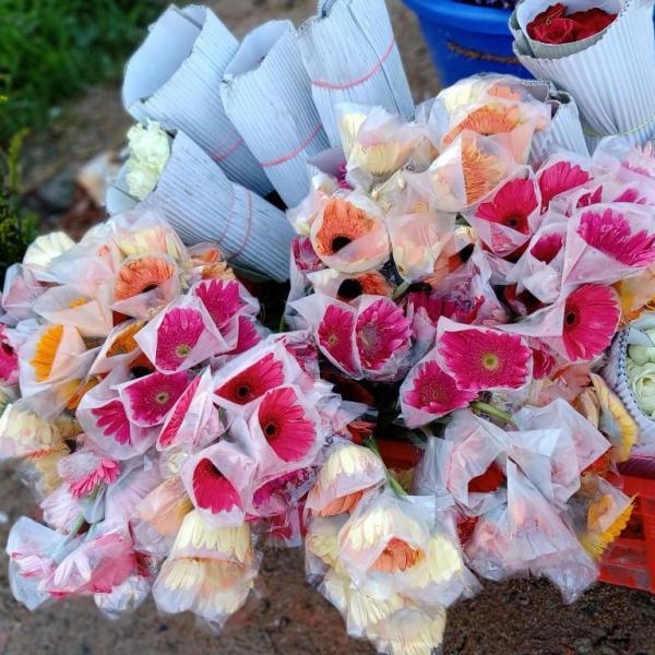 FD 199 Gerbera Flower