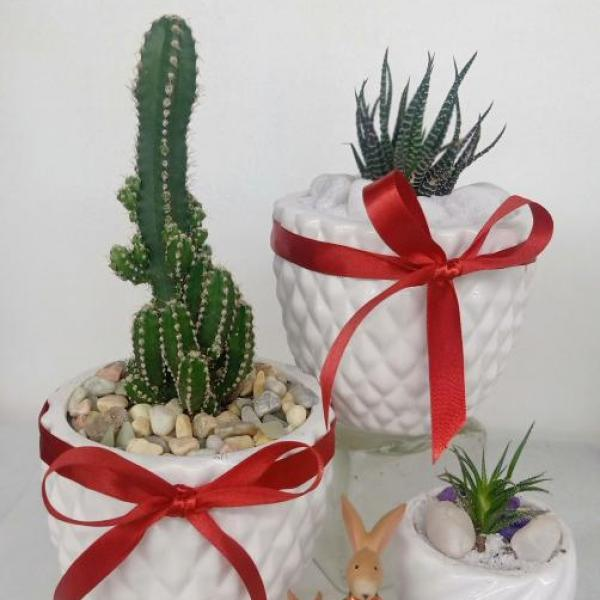 FD 208 Decorated Gift Plant
