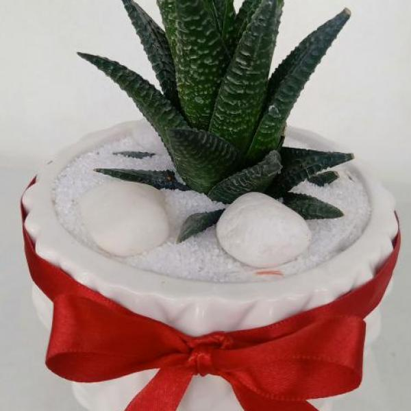 FD 206 Decorated Gift Succulent