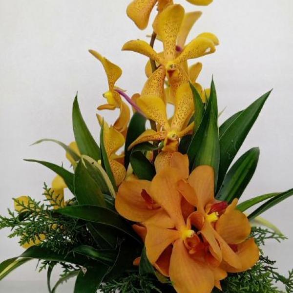 FD 131 Orchid Arrangement