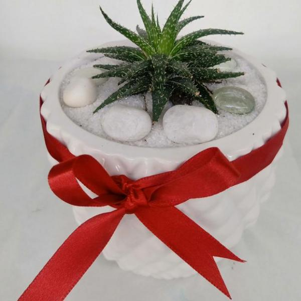 FD 205 Decorated Gift Succulent