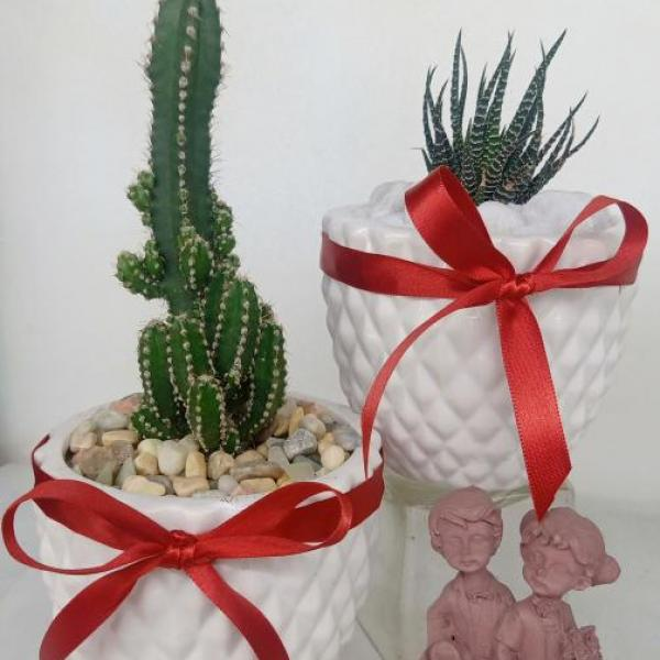 FD 207 Decorated Gift Plant
