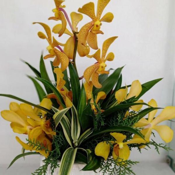 FD 129 Orchid Arrangement