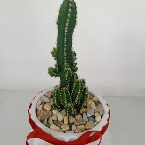 FD 214 Decorated Cactus