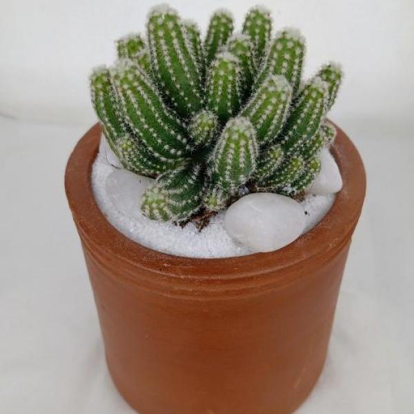 FD 231 Decorated Cactus