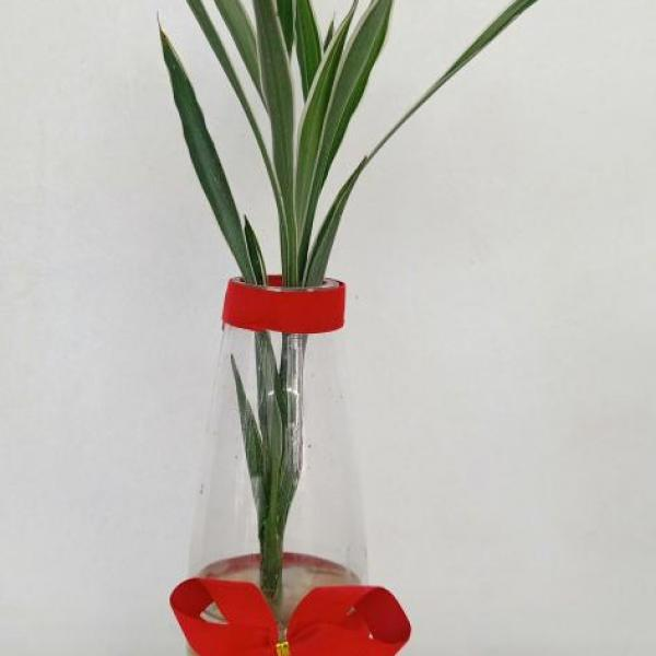 FD 103 Gift Plant