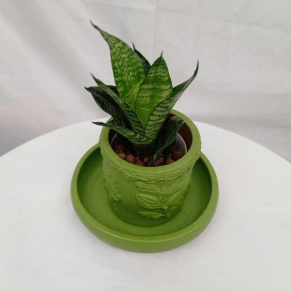 FD 295 INDOOR PLANT