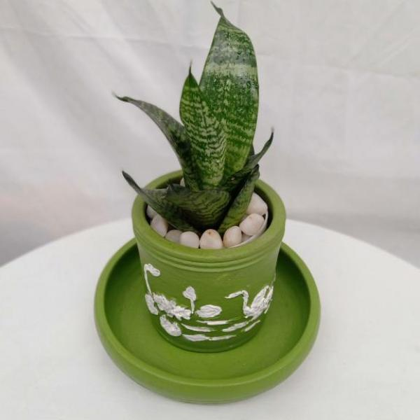 FD 297 INDOOR PLANT