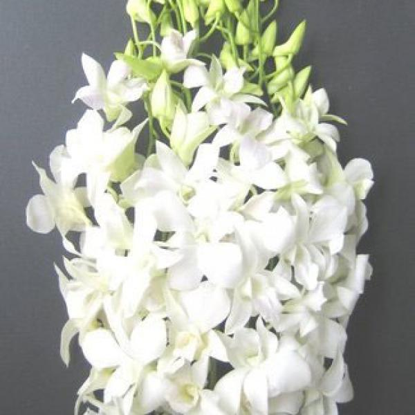 FD 127 Orchid Dendrobium White
