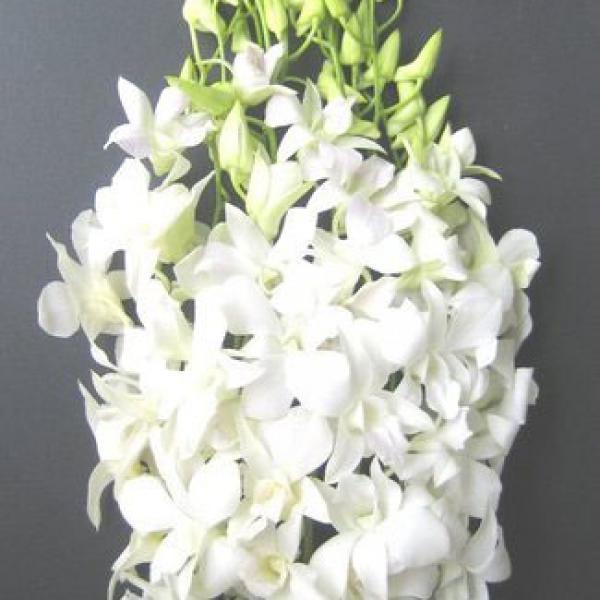 FD 127 Orchid Dendrobium White