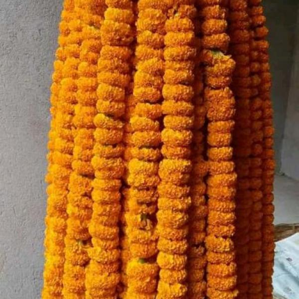 FD 309 Marri Gold  Mala