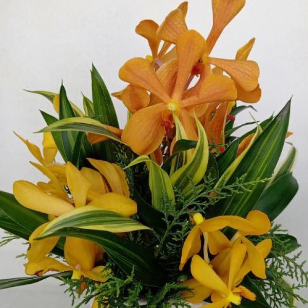 FD 130 Orchid Arrangement