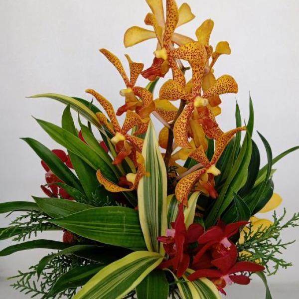 FD 128 Orchid Arrangement