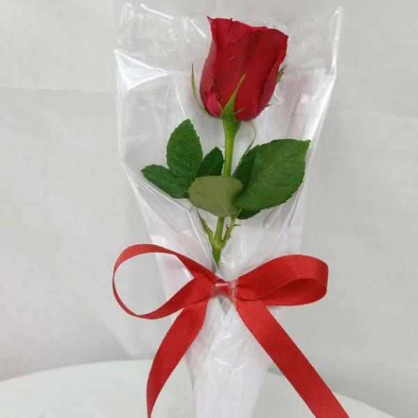 FD 299 Wrapped Rose